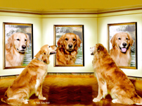 SmallPicture of dogs