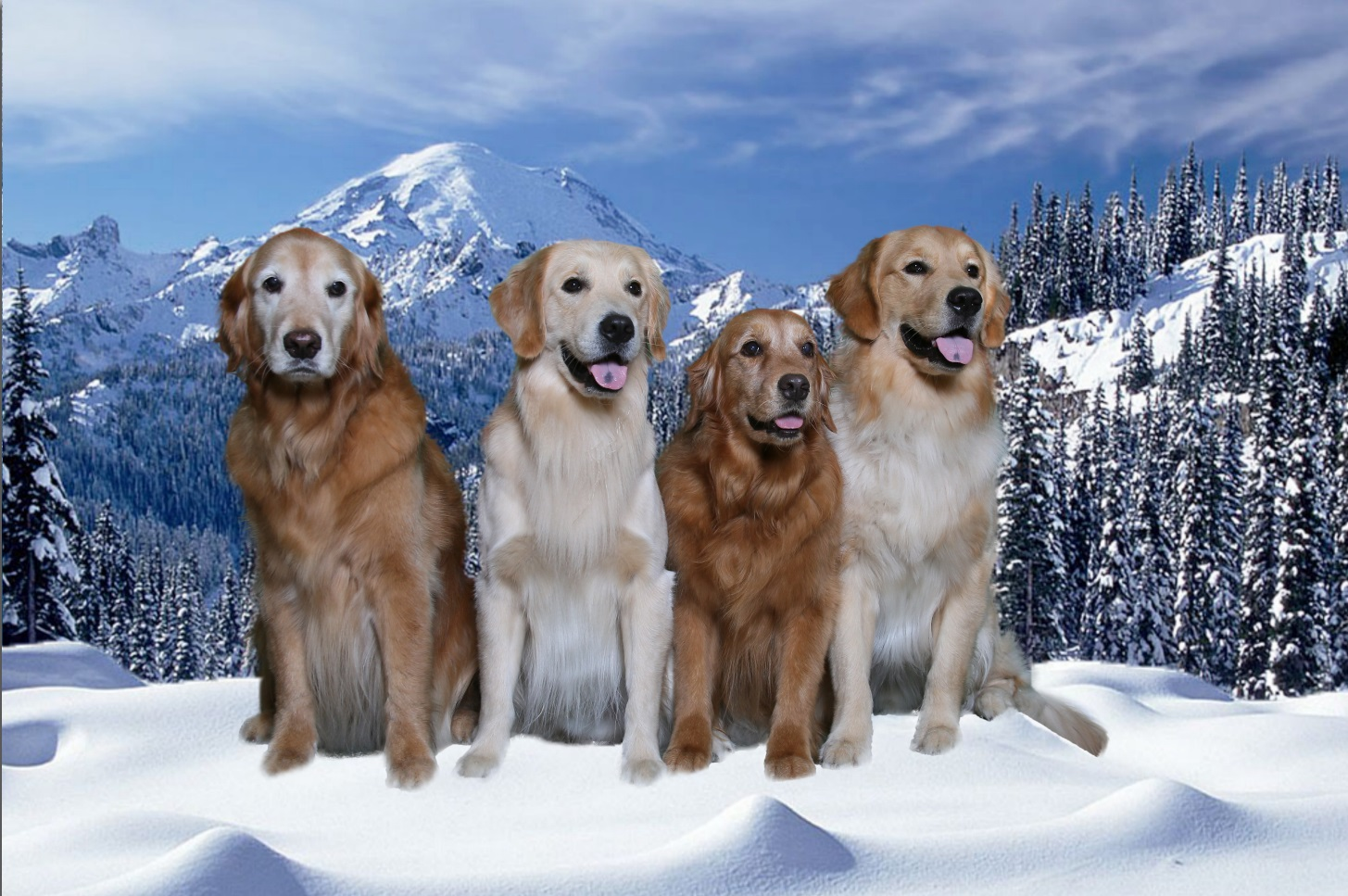 Small Picture of Dogs
