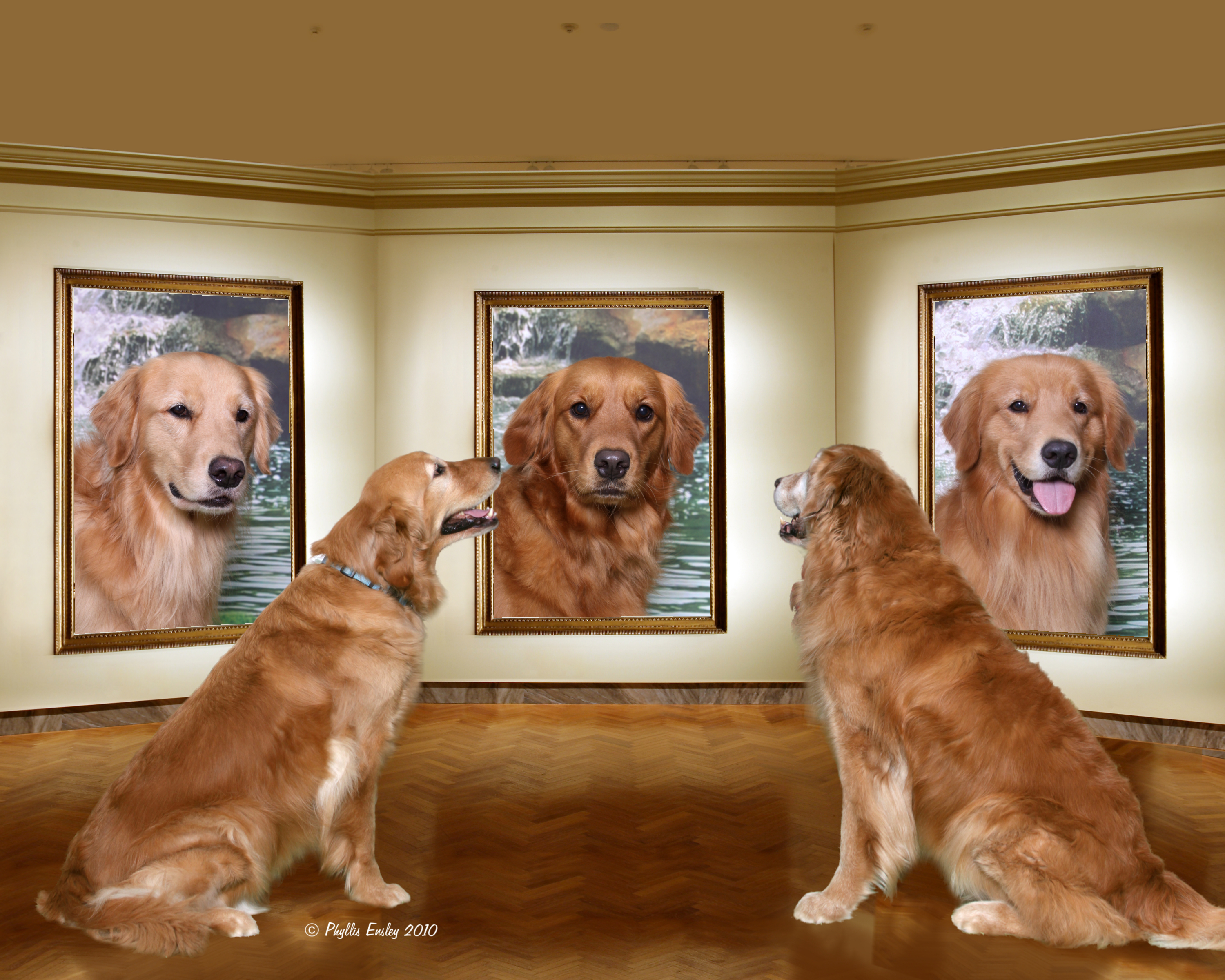Picture of dogs