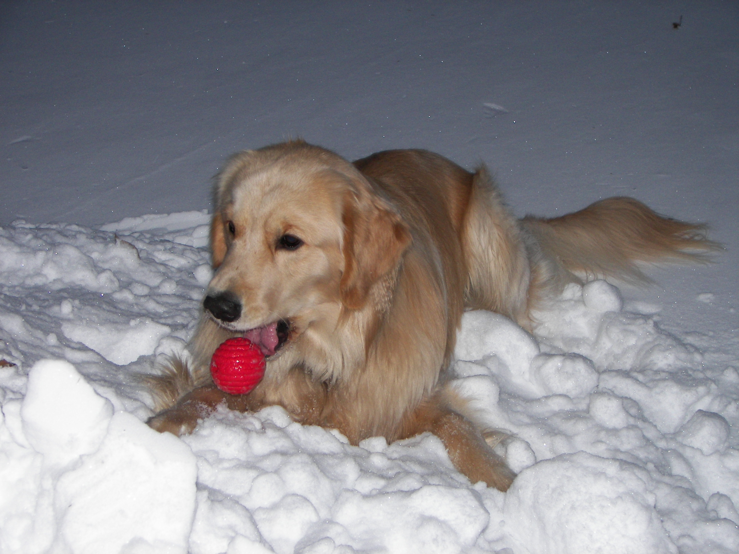 Picture of Kobi