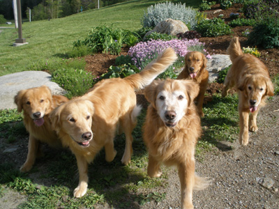 SmallPicture of dogs at Stowe