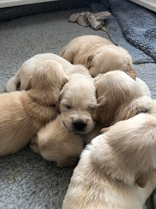 Small Picture of pups